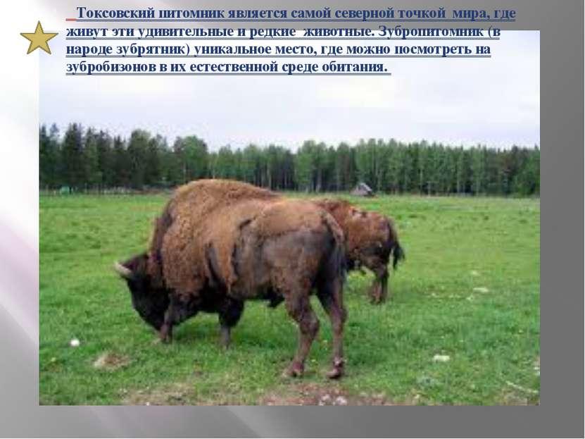 Токсовский питомник является самой северной точкой мира, где живут эти удивит...