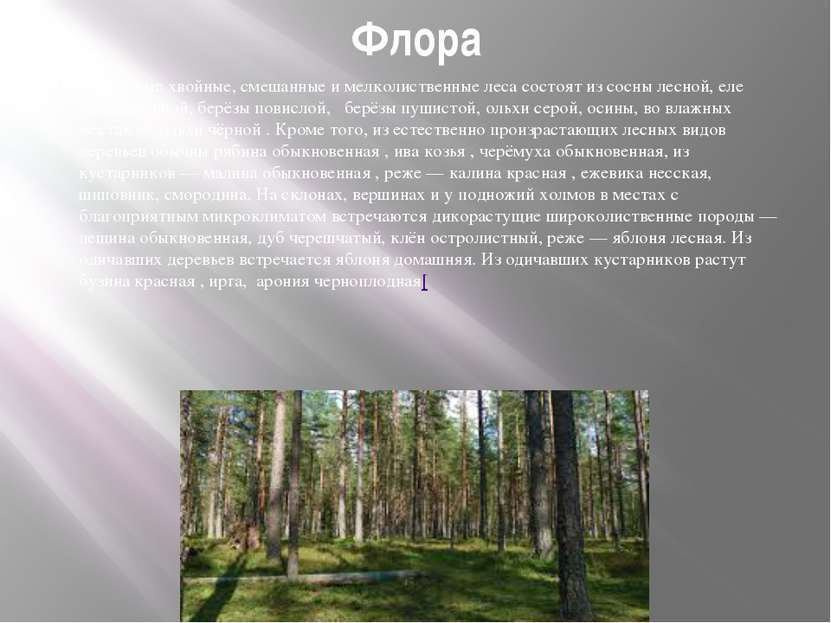 Флора Окрестные хвойные, смешанные и мелколиственные леса состоят из сосны ле...