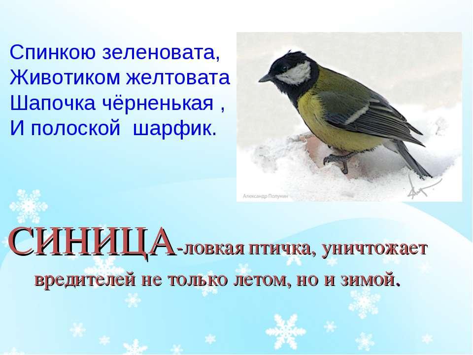 СИНИЦА-ловкая птичка, уничтожает вредителей не только летом, но и зимой. Спин...