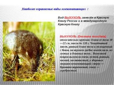 ВЫХУХОЛЬ (Desmana moschata) относительно крупная: длина ее тела 18—22 см, мас...