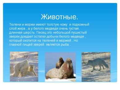 Животные. Тюлени и моржи имеют толстую кожу и подкожный слой жира , а у белог...