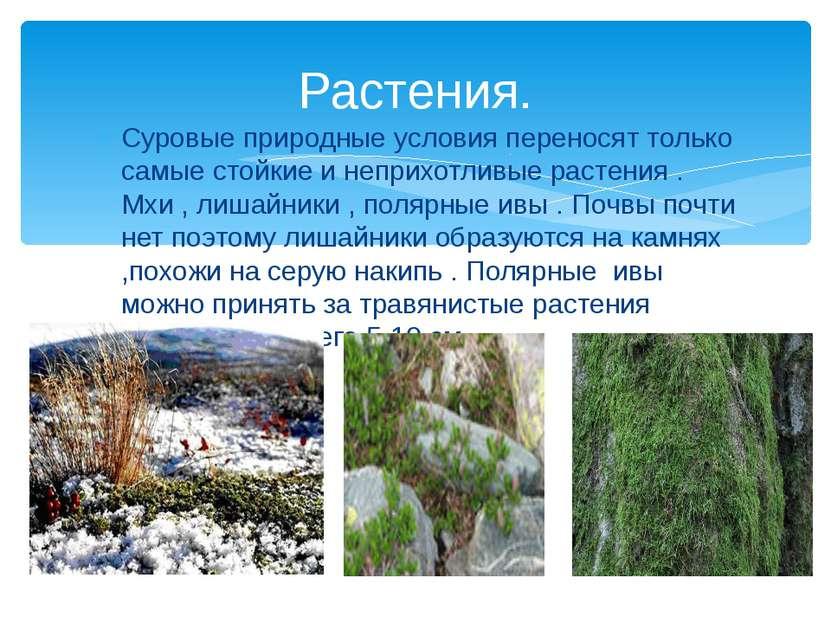 Растения. Суровые природные условия переносят только самые стойкие и неприхот...