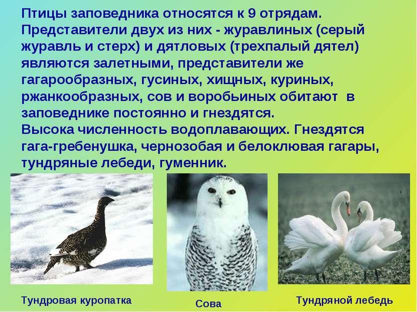 Птицы заповедника относятся к 9 отрядам. Представители двух из них - журавлин...