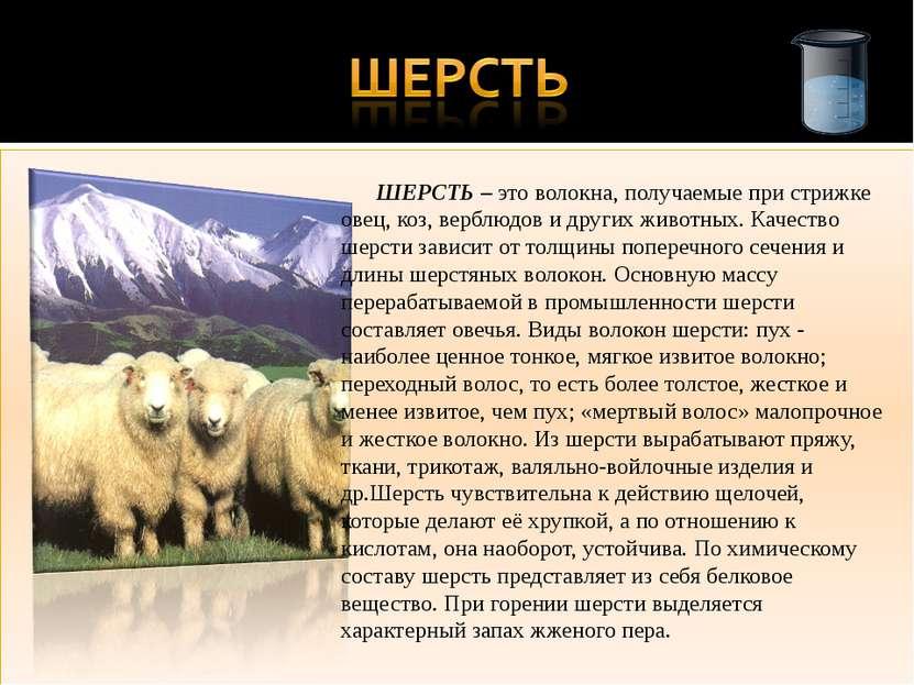 ШЕРСТЬ – это волокна, получаемые при стрижке овец, коз, верблюдов и других жи...