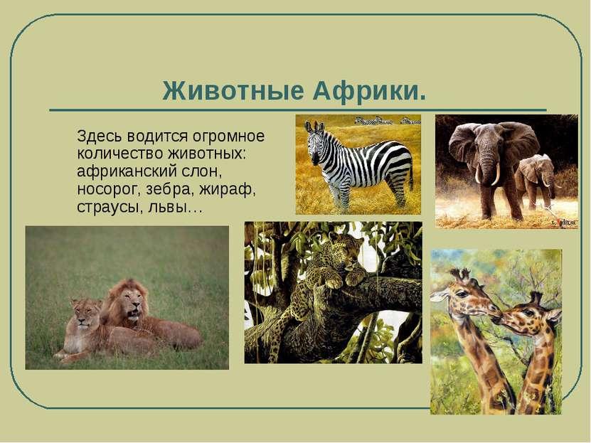 Животные Африки. Здесь водится огромное количество животных: африканский слон...