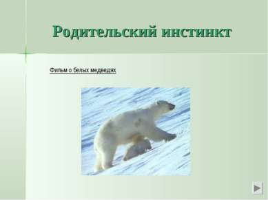 Родительский инстинкт Фильм о белых медведях