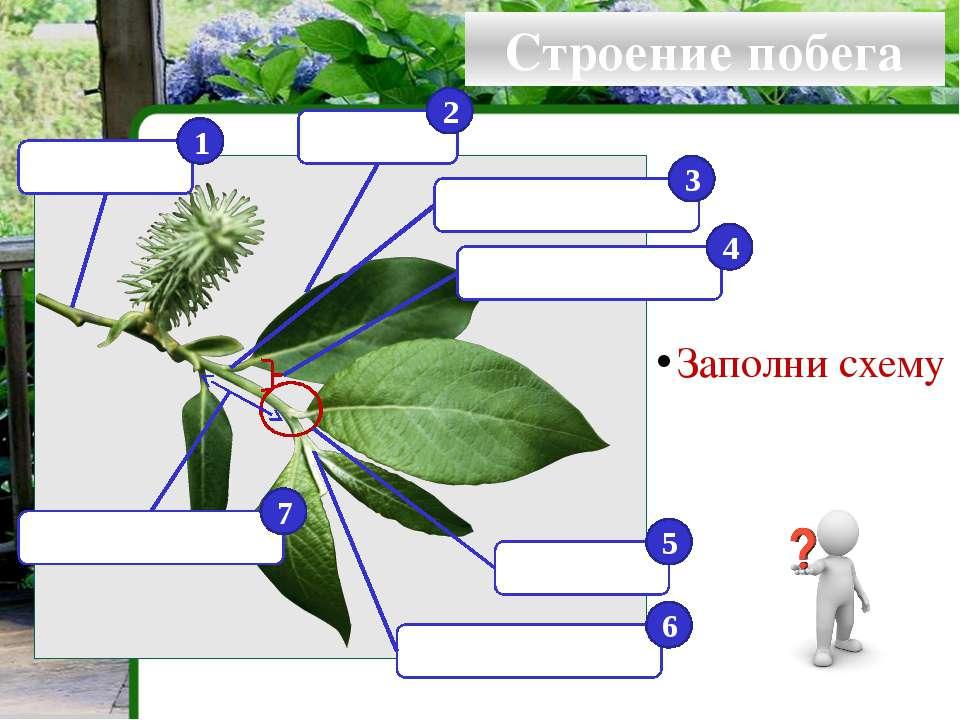 Виды стеблей по направлению и характеру роста