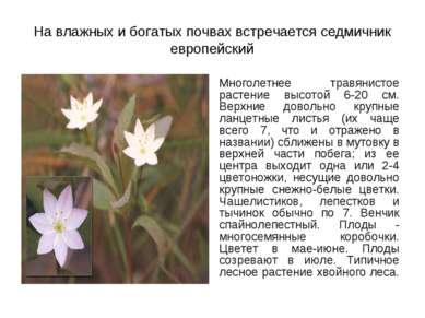 На влажных и богатых почвах встречается седмичник европейский Многолетнее тра...