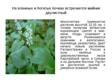 На влажных и богатых почвах встречается майник двулистный Многолетнее травяни...