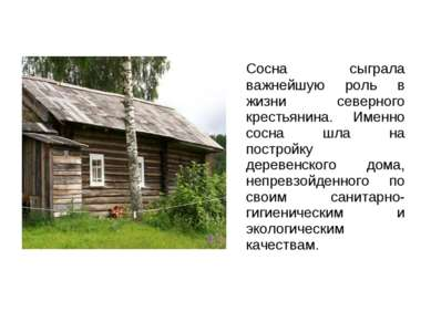 Сосна сыграла важнейшую роль в жизни северного крестьянина. Именно сосна шла ...