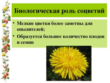 Биологическая роль соцветий Мелкие цветки более заметны для опылителей; Образ...