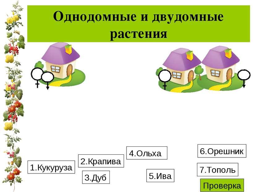 Однодомные и двудомные растения 1.Кукуруза 4.Ольха 3.Дуб 6.Орешник 2.Крапива ...