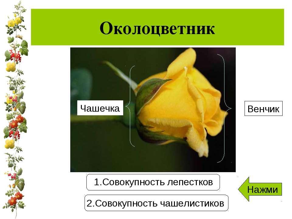 Околоцветник Чашечка Венчик Нажми
