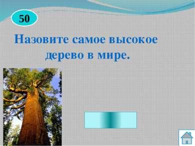Белый гриб Какой гриб считается самым ценным из всех грибов? 30