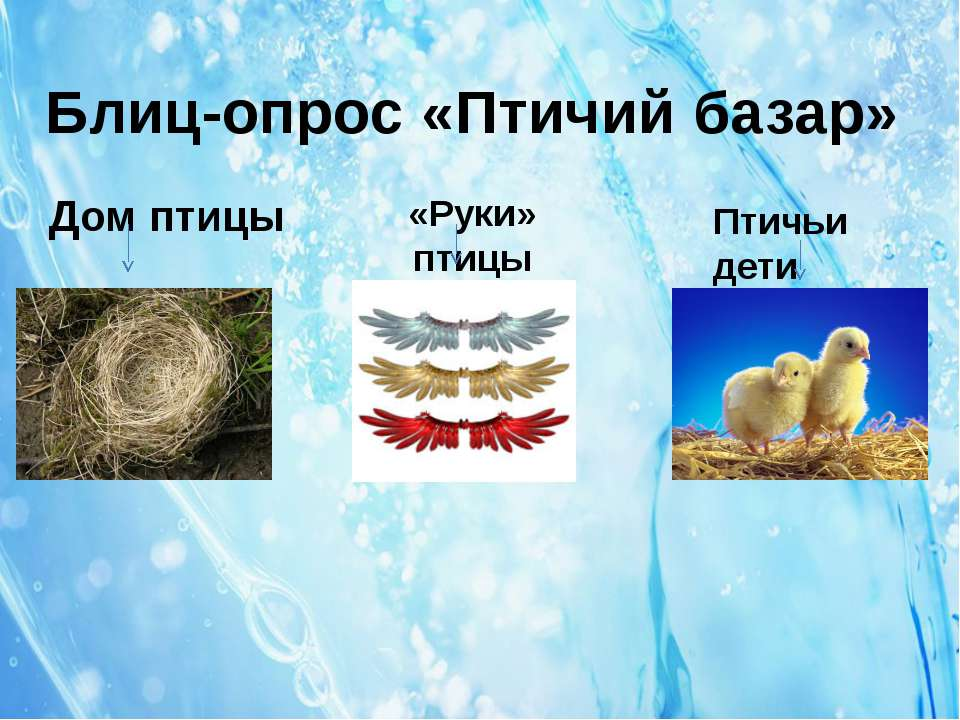 Блиц-опрос «Птичий базар» Дом птицы «Руки» птицы Птичьи дети