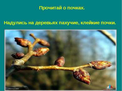 Надулись на деревьях пахучие, клейкие почки. Прочитай о почках.