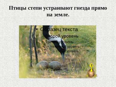 Птицы степи устраивают гнезда прямо на земле.