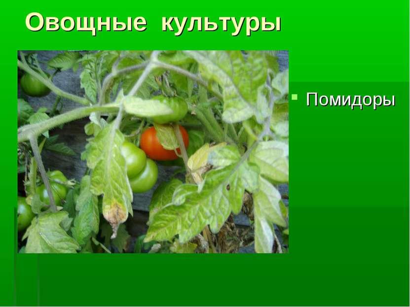 Овощные культуры Помидоры