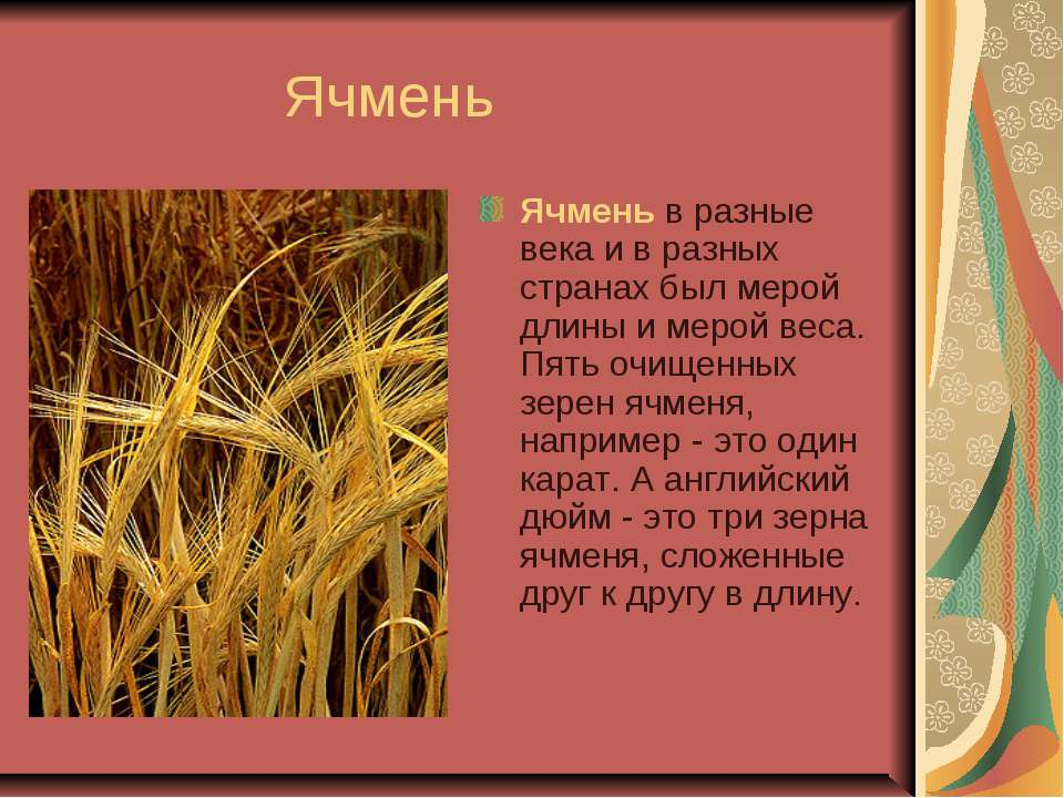Ячмень Ячмень в разные века и в разных странах был мерой длины и мерой веса. ...
