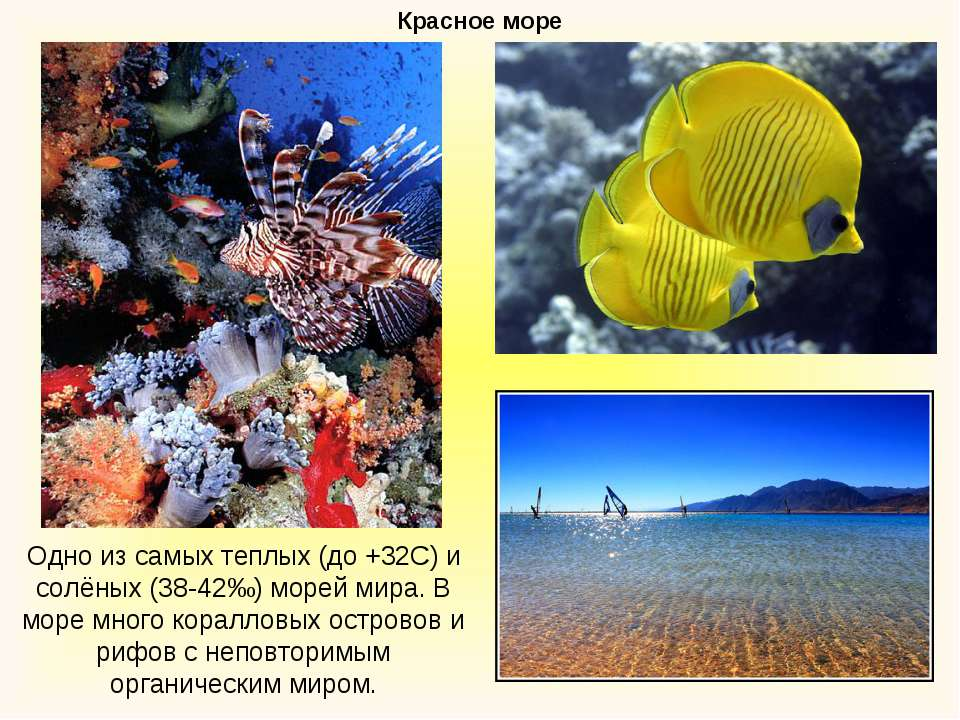 Красное море Одно из самых теплых (до +32С) и солёных (38-42‰) морей мира. В ...