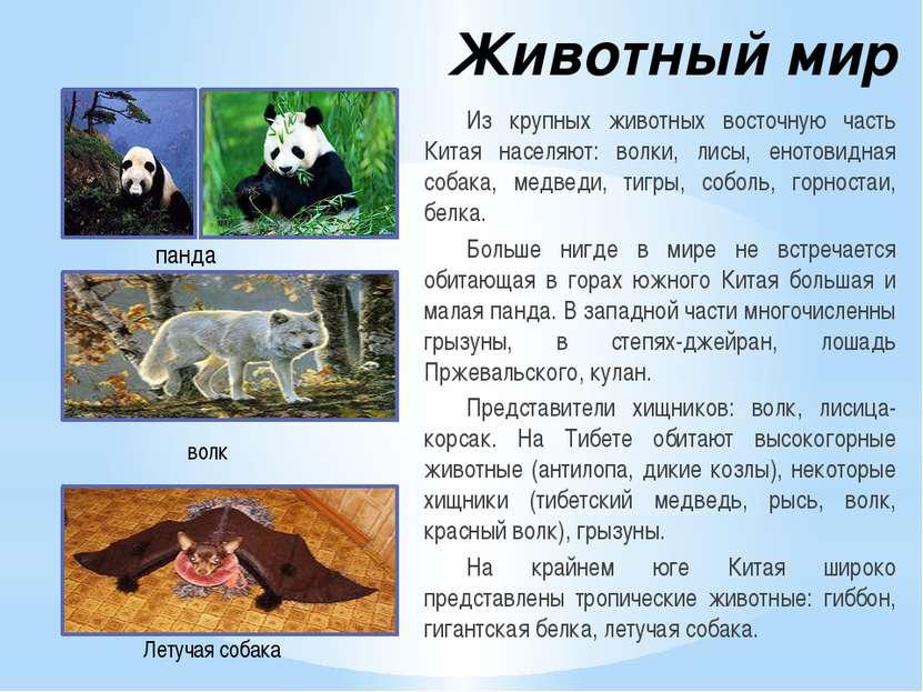 Животный мир Из крупных животных восточную часть Китая населяют: волки, лисы,...