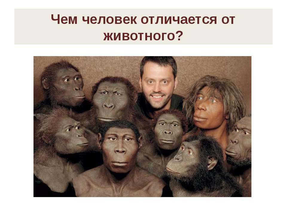Чем человек отличается от животного?