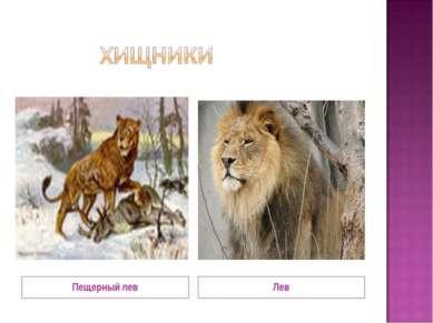 Пещерный лев Лев