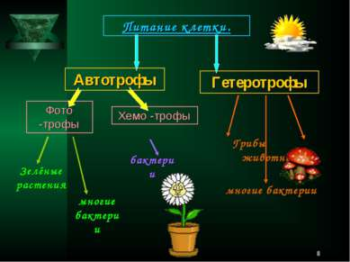 * Питание клетки. Автотрофы Фото -трофы Хемо -трофы Гетеротрофы Зелёные расте...