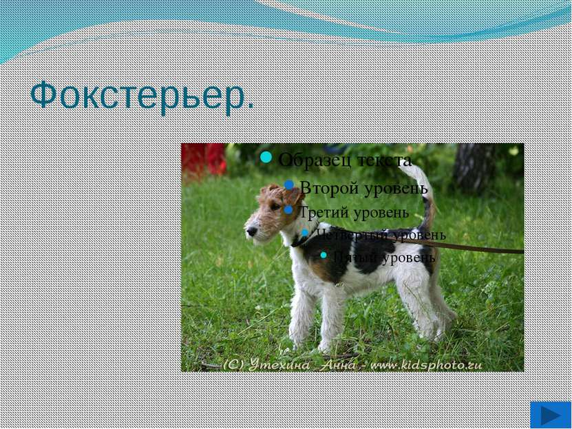 Южнорусская овчарка.