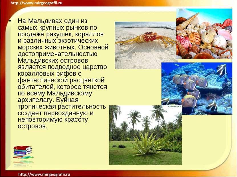 На Мальдивах один из самых крупных рынков по продаже ракушек, кораллов и разл...