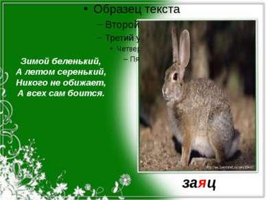 Зимой беленький, А летом серенький, Никого не обижает, А всех сам боится. заяц