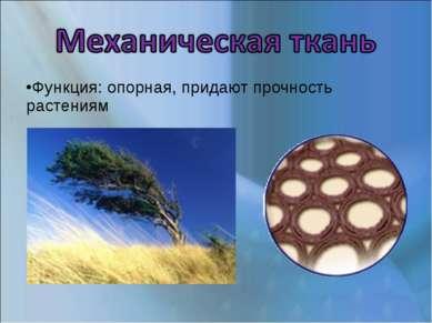 Функция: опорная, придают прочность растениям