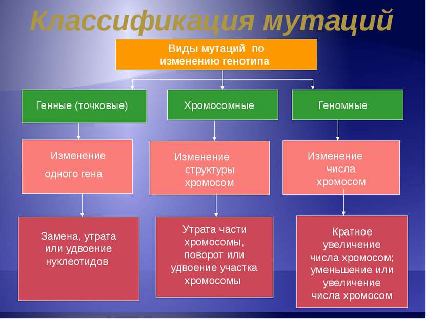 Классификация мутаций Виды мутаций по изменению генотипа Изменение одного ген...