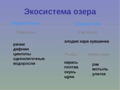 Экосистема озера Верхний этаж Нижний этаж Планктон рачки дафнии циклопы однок...