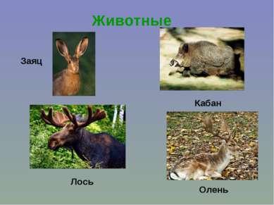 Животные Заяц Лось Кабан Олень