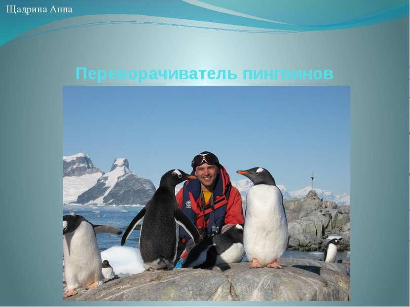 Переворачиватель пингвинов Щадрина Анна