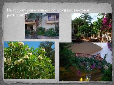 На территории отеля много красивых цветов и растений! На территории отеля мно...