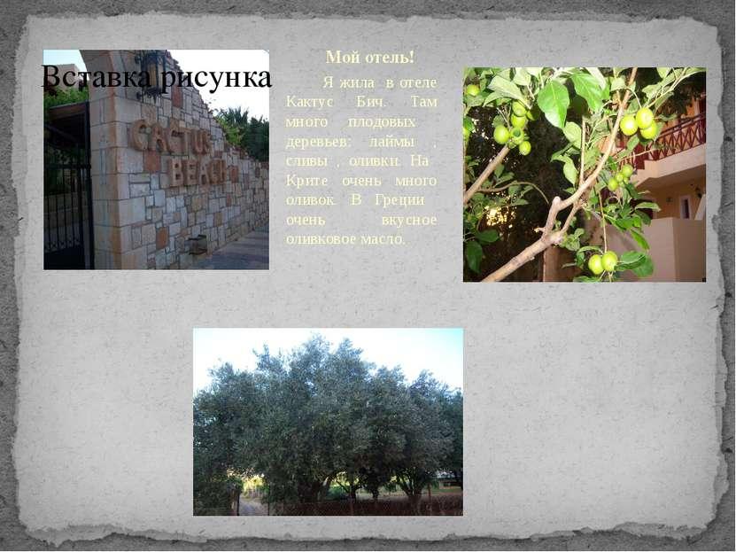 Мой отель! Я жила в отеле Кактус Бич. Там много плодовых деревьев: лаймы , сл...