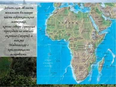 Эфиопская область занимает большую часть африканского материка, кроме севера ...