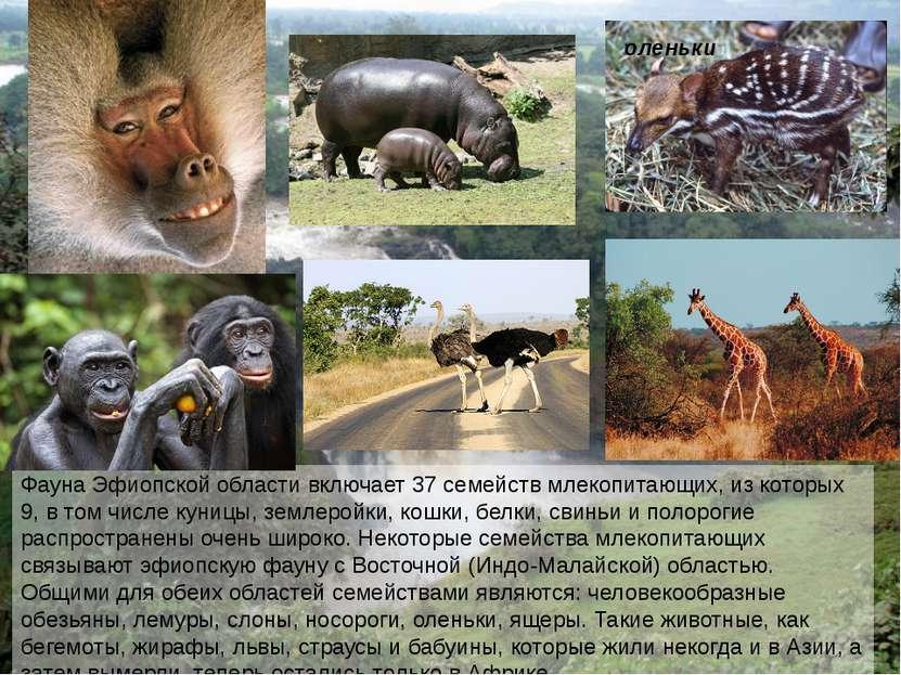 Фауна Эфиопской области включает 37 семейств млекопитающих, из которых 9, в т...
