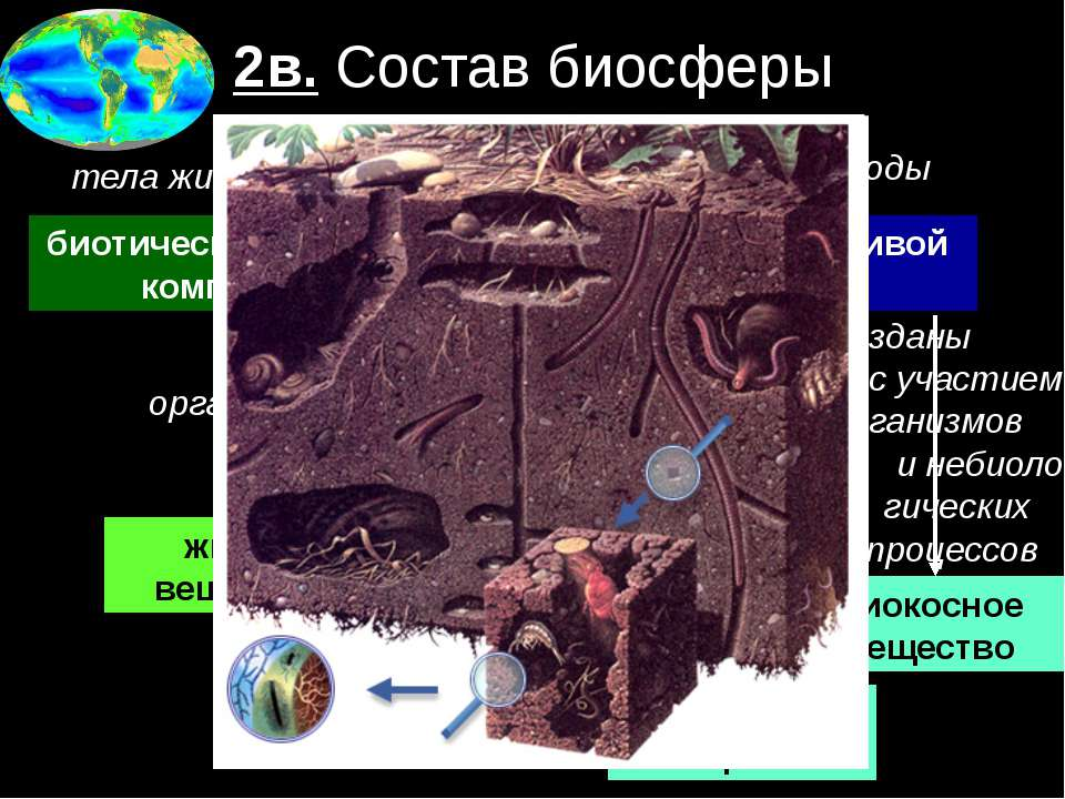 2в. Состав биосферы биотический = живой компонент абиотический = неживой комп...