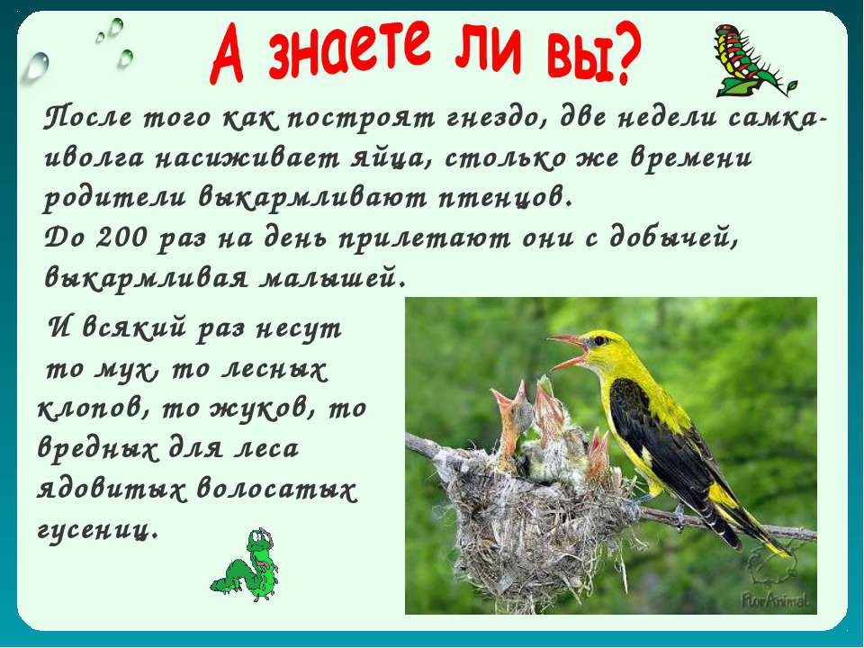 И всякий раз несут то мух, то лесных клопов, то жуков, то вредных для леса яд...