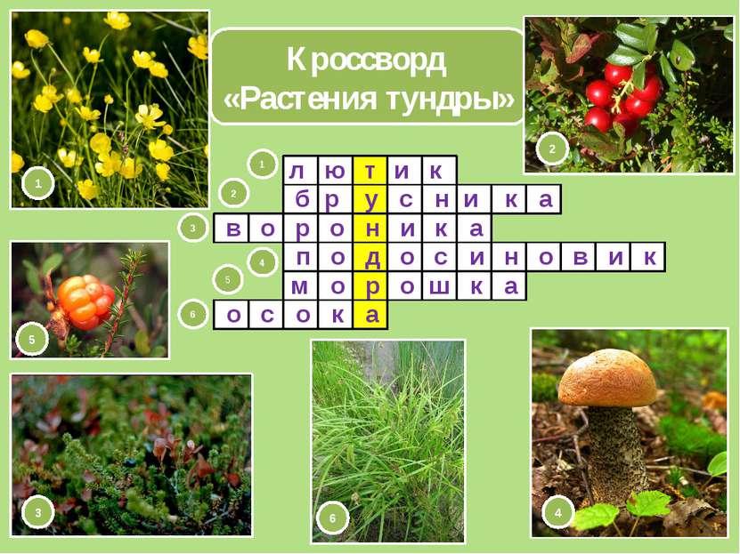 Кроссворд «Растения тундры» т у н д р а л ю и к б 1 2 3 4 5 6 1 2 3 4 5 6 и а...