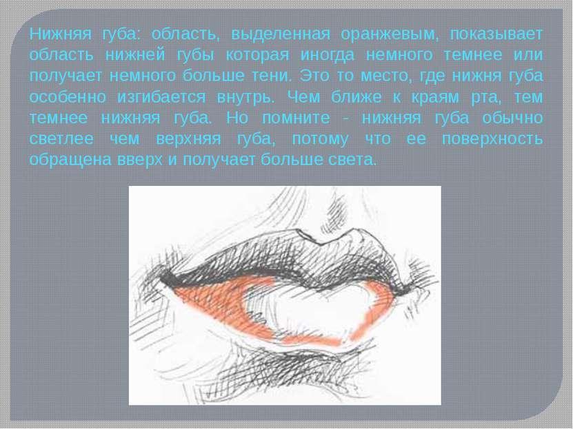 Нижняя губа: область, выделенная оранжевым, показывает область нижней губы ко...