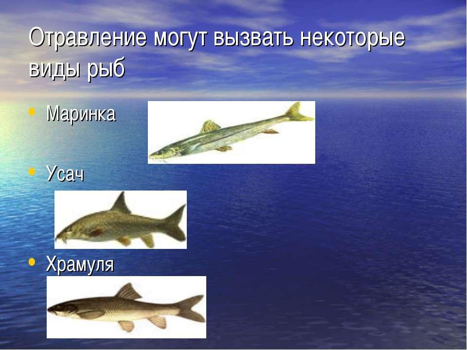 Отравление могут вызвать некоторые виды рыб Маринка Усач Храмуля
