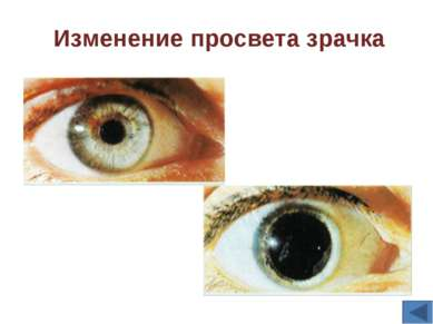Зрительный анализатор состоит из трех частей: рецепторы сетчатки глаза, зрите...