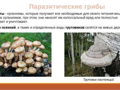 Паразитические грибы Паразиты - организмы, которые получают все необходимые д...