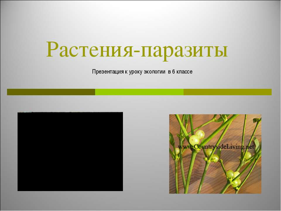 Растения-паразиты Презентация к уроку экологии в 6 классе