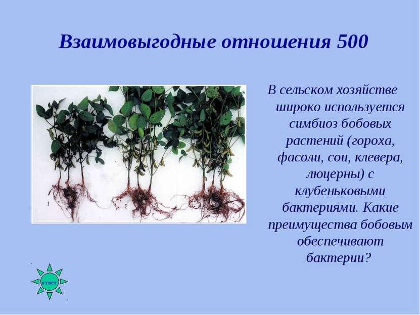 Взаимовыгодные отношения 500 В сельском хозяйстве широко используется симбиоз...