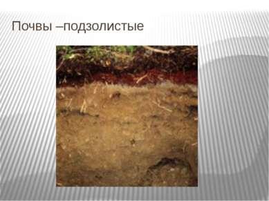 Почвы –подзолистые